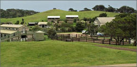 Ace Hi Riding Ranch - Accommodation Adelaide