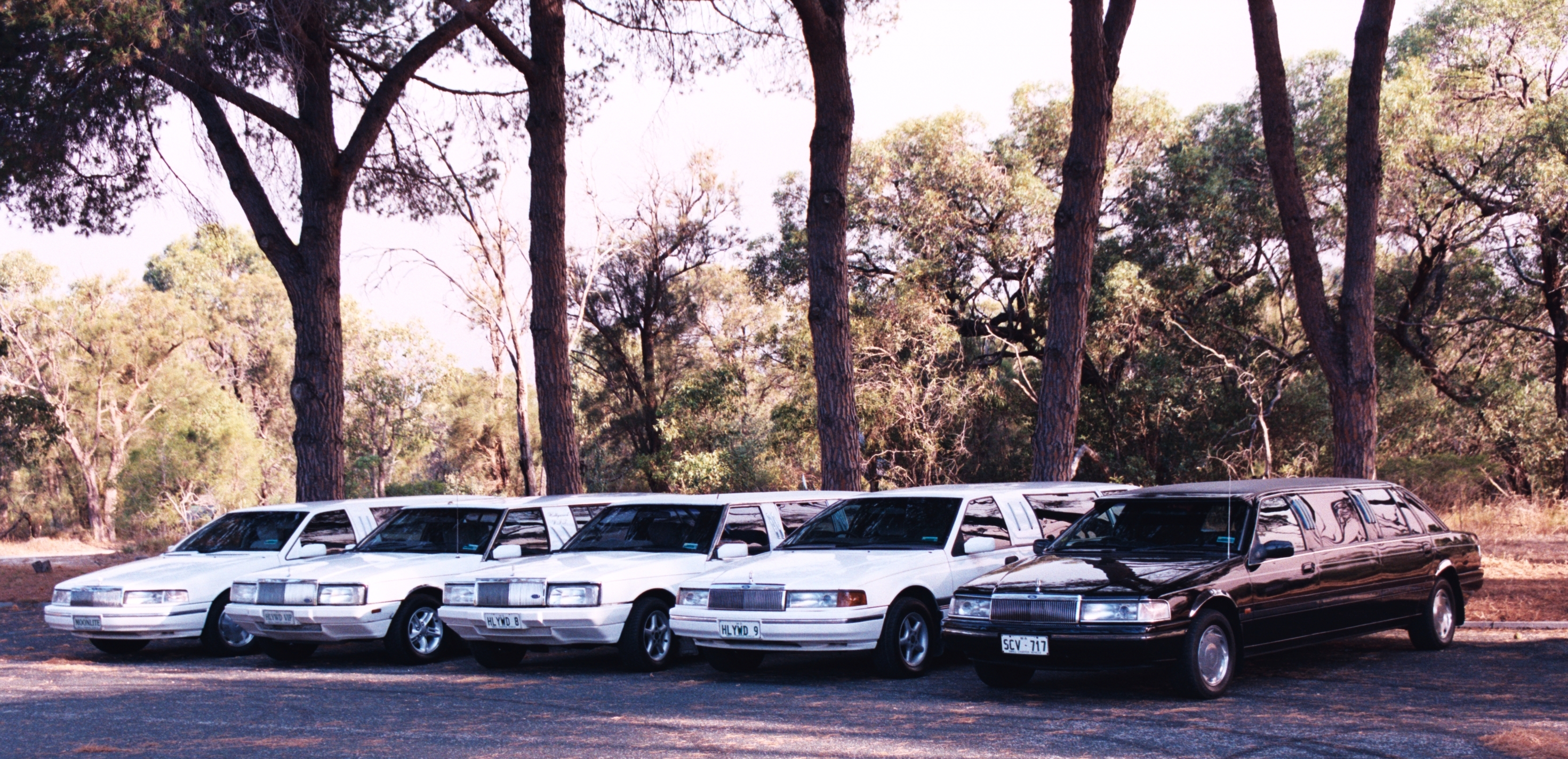 Hollywood VIP Limousines - Accommodation Adelaide
