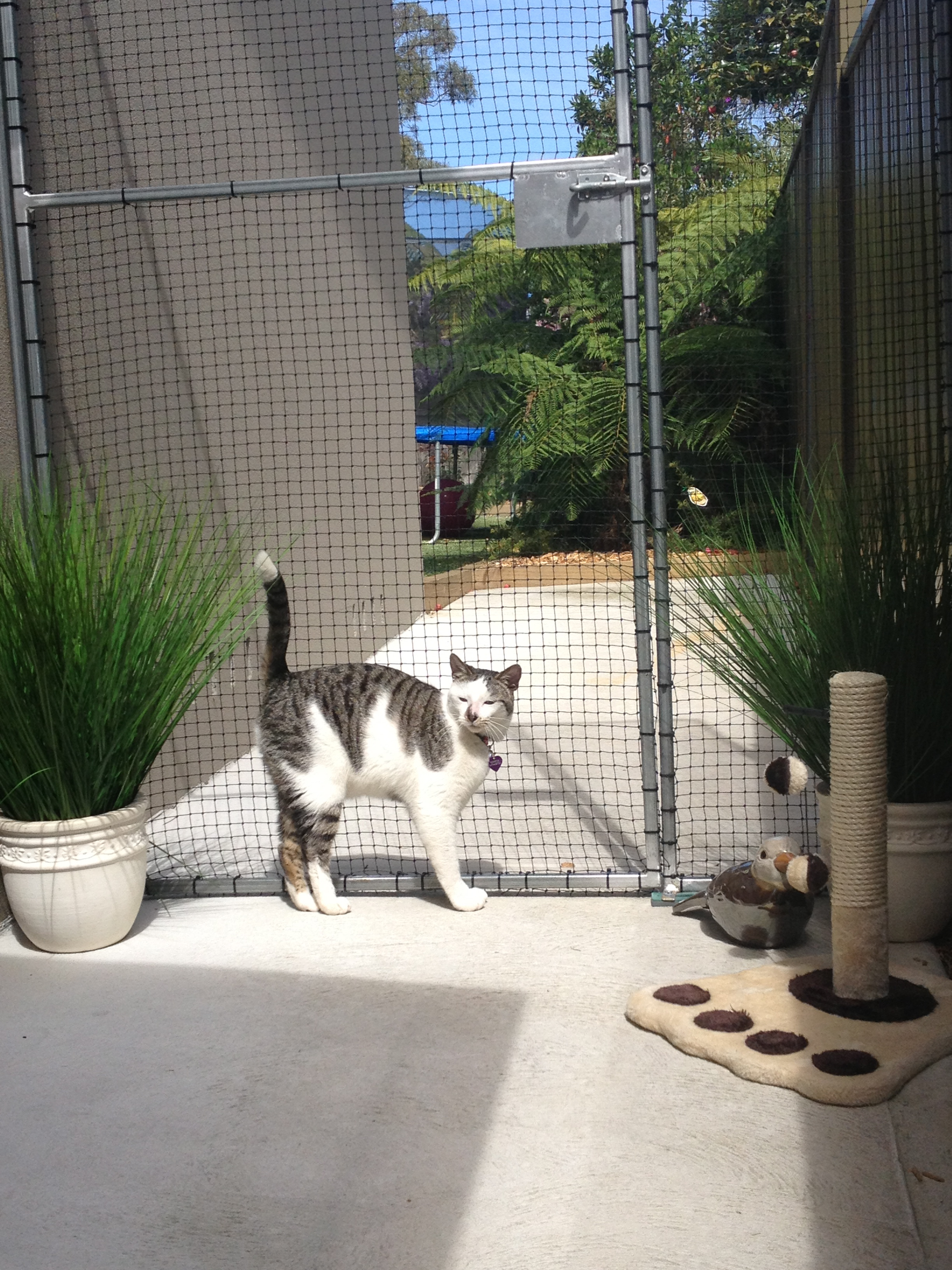 Caringbah Cat Hotel - Accommodation Adelaide