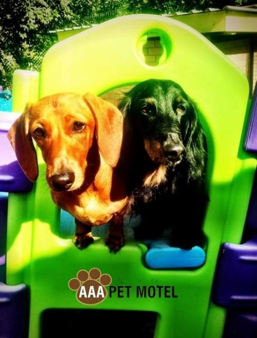 AAA Pet Motel - Accommodation Adelaide
