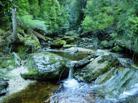 Tarkine Wilderness Experience at Corinna - Accommodation Adelaide