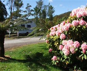 Zeehan Bush Camp  and Caravan Park