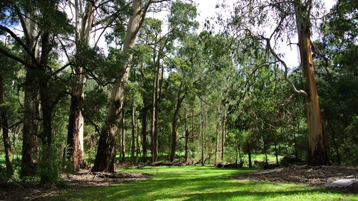 Wildwood Retreat - Accommodation Adelaide