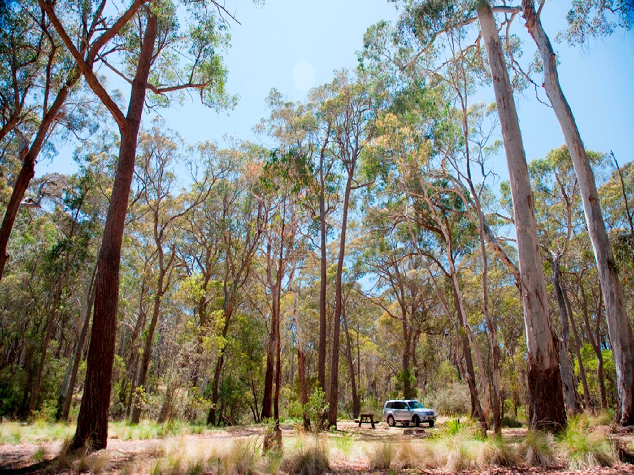 Coolah Tops National Park Camping - Accommodation Adelaide