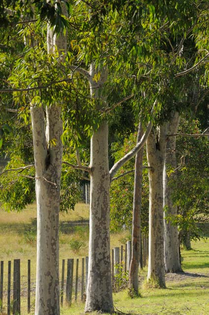 Stringybark Cottages - Accommodation Adelaide