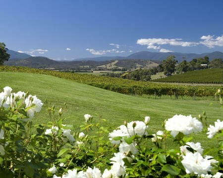 Balgownie Estate Vineyard Resort and Spa - Accommodation Adelaide