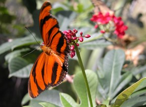 Butterfly Farm - Accommodation Adelaide
