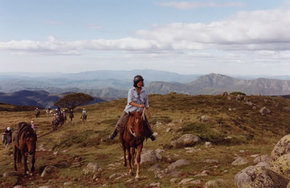 High Country Horses - Accommodation Adelaide