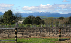 Buller View Wines - Accommodation Adelaide