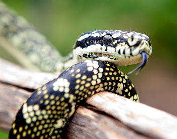 Reptile Encounters - Accommodation Adelaide