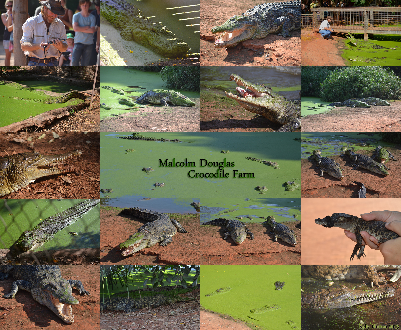 The Malcolm Douglas Crocodile Park - Accommodation Adelaide