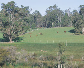 Scenic Drives - Bunbury Collie Donnybrook - Accommodation Adelaide