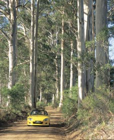Mount Shadforth Scenic Drive - Accommodation Adelaide