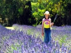 Brayfield Park Lavender Farm - Accommodation Adelaide