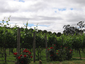 Manyara Vineyard - Accommodation Adelaide