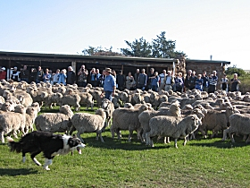 Curringa Farm - Accommodation and Farm Tours - Accommodation Adelaide
