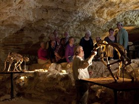 Naracoorte Caves National Park - Accommodation Adelaide