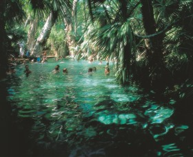 Mataranka Thermal Pool - Accommodation Adelaide