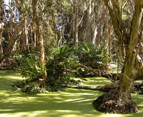 Arkarra Lagoons and Tea Gardens - Accommodation Adelaide