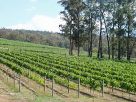 Piedmont Vineyard - Accommodation Adelaide