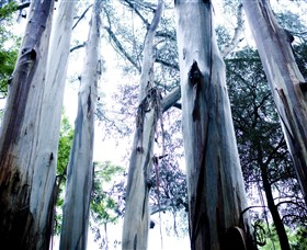 Dandenong Ranges National Park - Accommodation Adelaide