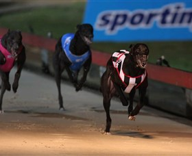 Dapto Dogs - Accommodation Adelaide