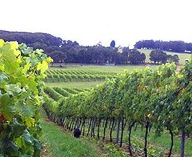 Banjo's Run Winery and Vineyard - Accommodation Adelaide