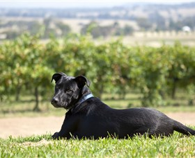 Moothi Estate Vineyard and Cellar Door - Accommodation Adelaide