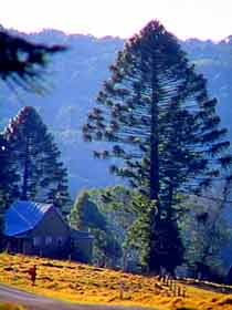 Bunya Mountains National Park - Accommodation Adelaide