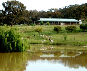 Clearview Alpacas - Accommodation Adelaide