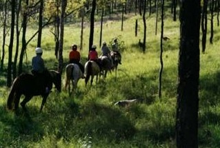 Hunter Valley Horse Riding and Adventures - Accommodation Adelaide