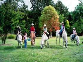 Limestone Coast Horseriding - Accommodation Adelaide