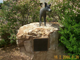Dingo Statue - Accommodation Adelaide