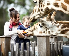 Taronga Western Plains Zoo Dubbo - Accommodation Adelaide