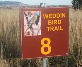 Weddin Bird Trails - Accommodation Adelaide