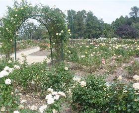 Victoria Park Rose Garden - Accommodation Adelaide