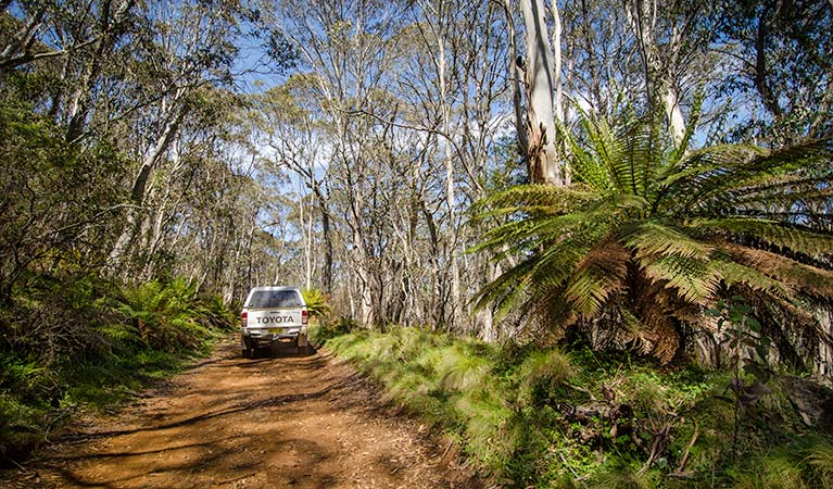 Barrington trail - Accommodation Adelaide