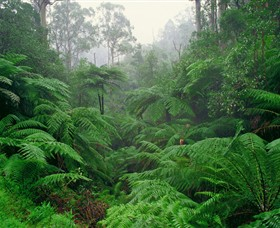 Tarra Bulga National Park - Accommodation Adelaide