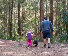 Olney State Forest - Watagan Mountains - Accommodation Adelaide