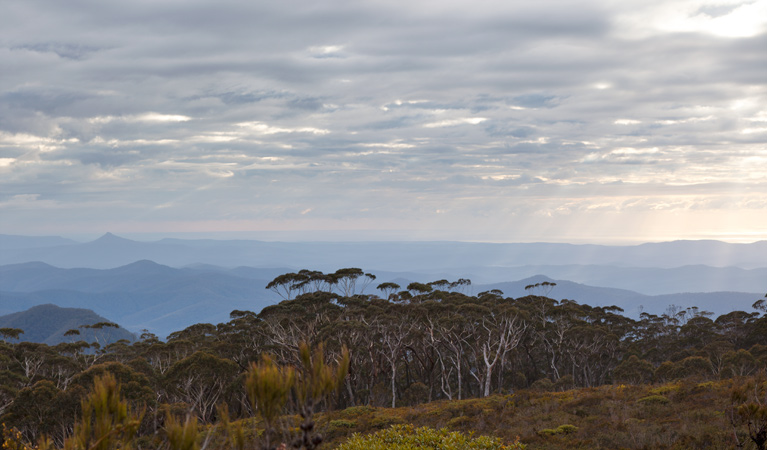 Mount Budawang trail - Accommodation Adelaide