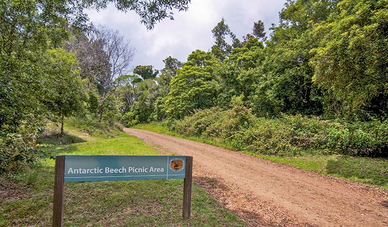 Antarctic Beech picnic area - Accommodation Adelaide