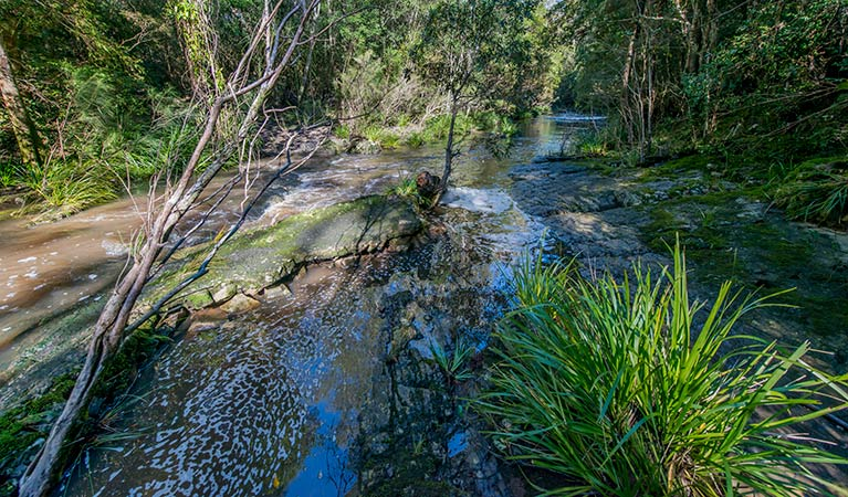Dawson River walking track - Accommodation Adelaide