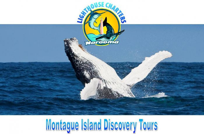 Lighthouse Charters Narooma - Accommodation Adelaide