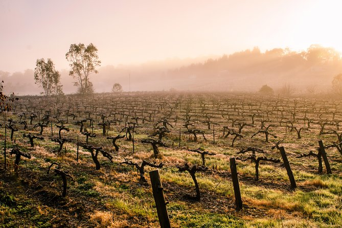 Barossa Valley Private Tour, It's your tour the way you want it!.