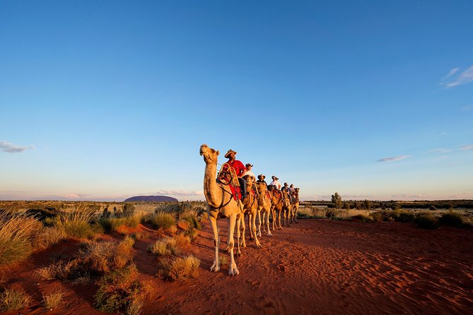 Uluru Camel Express Sunrise or Sunset Tours - Accommodation Adelaide