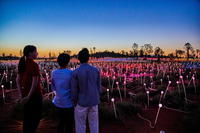Uluru Field of Light Sunrise Tour - Accommodation Adelaide