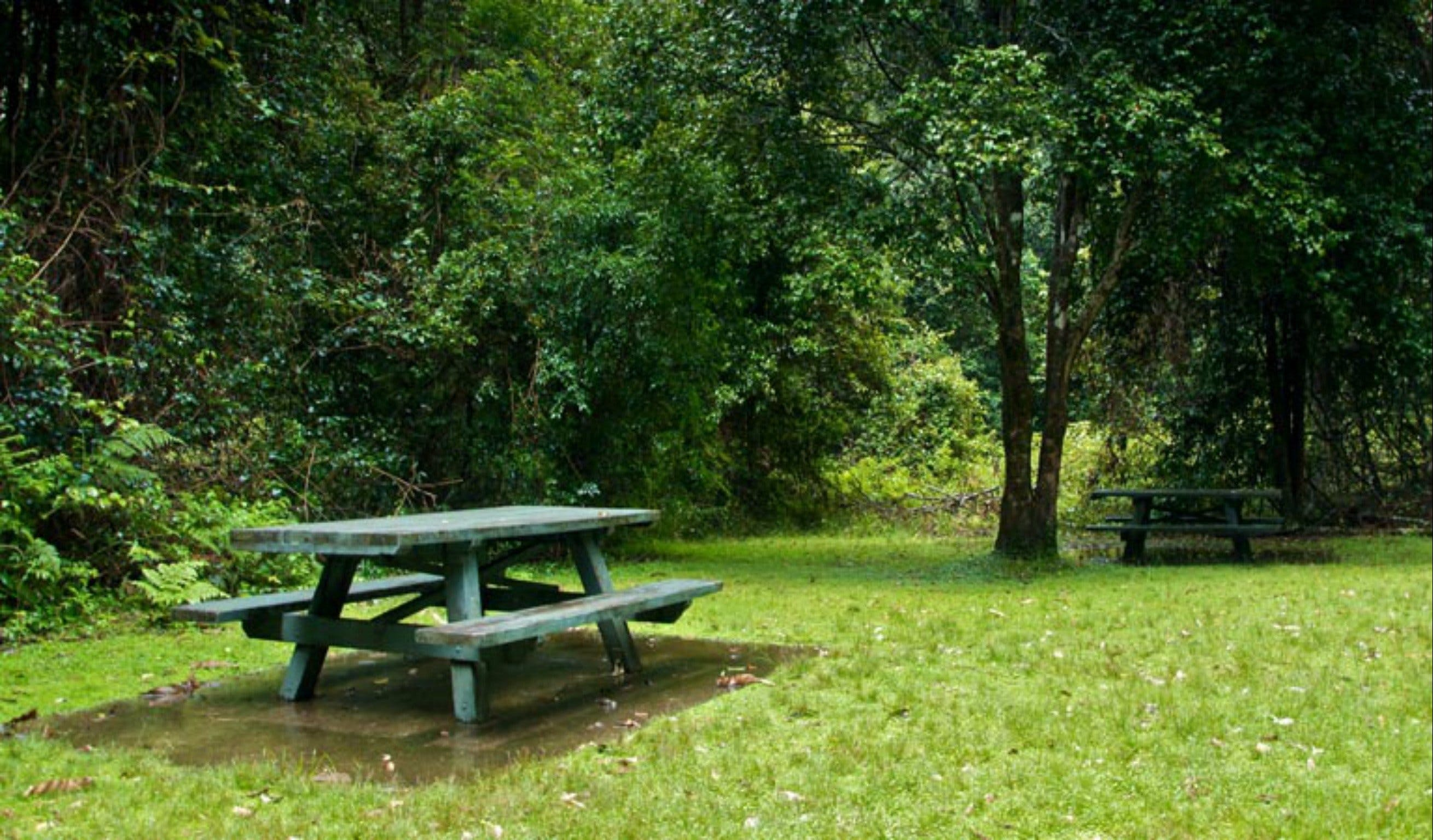Williams River picnic area - Accommodation Adelaide