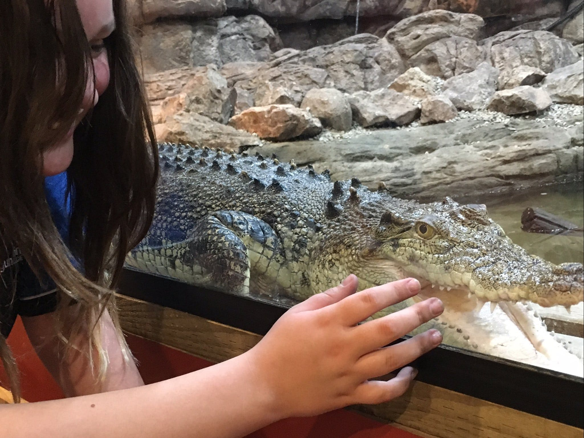 Canberra Reptile Zoo - Accommodation Adelaide
