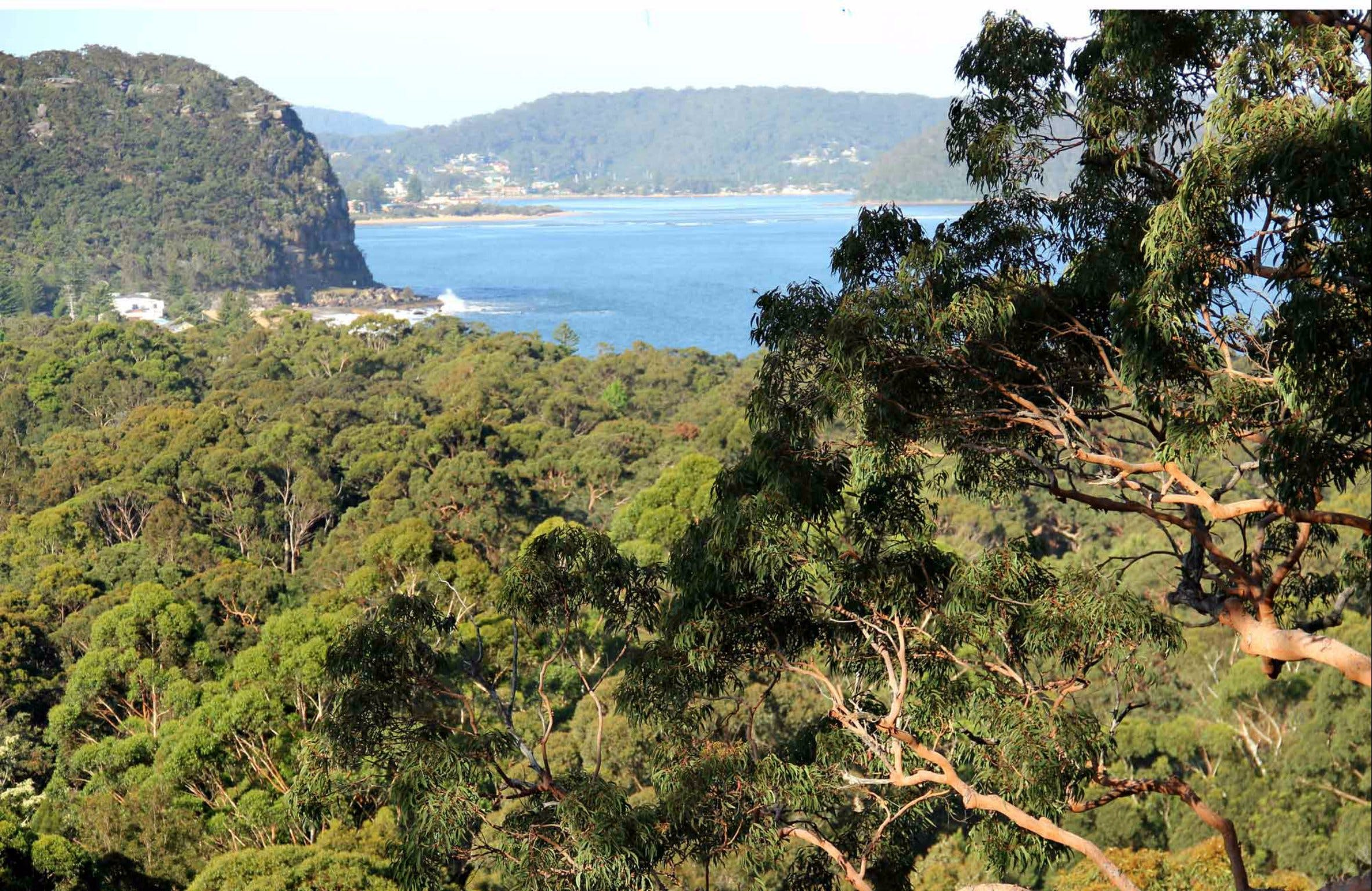 Patonga to Pearl Beach Walking Track - Accommodation Adelaide