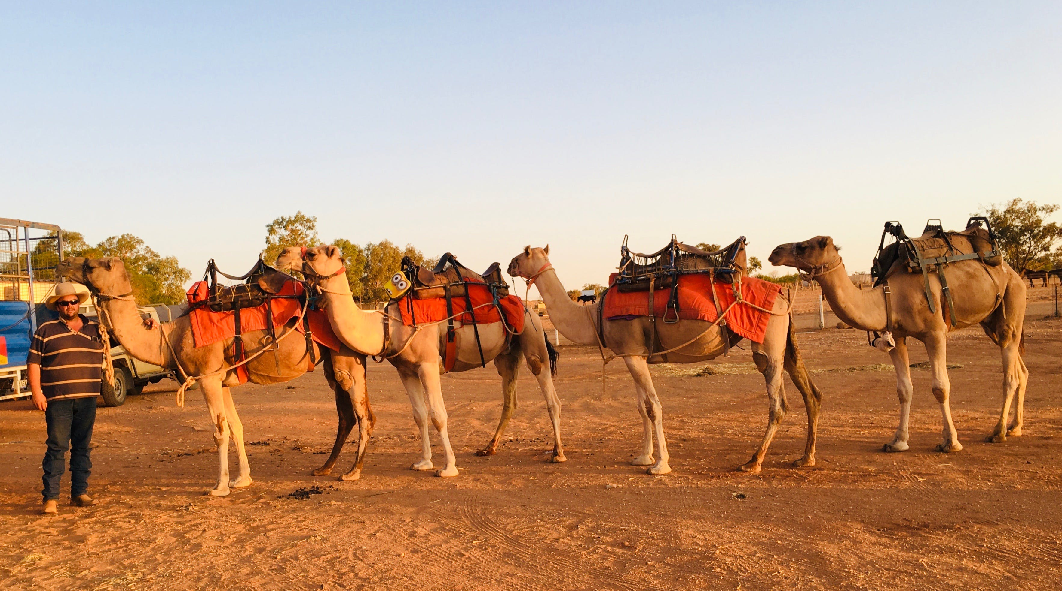 Broken Hill Camels - Accommodation Adelaide